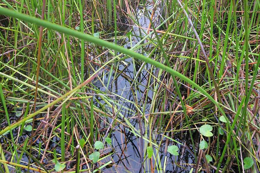 Wetlands and Floodplains